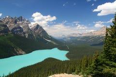 加拿大湖peyto 库存图片