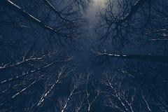 加拿大白杨树舒展往天空在Hecla 免版税图库摄影