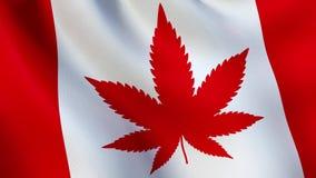 加拿大的旗子用大麻叶子,动画代表了 股票视频
