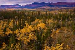 加拿大秋天金领土育空 图库摄影