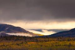 加拿大秋天金领土育空 免版税图库摄影