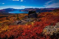 加拿大鱼湖领土育空 免版税图库摄影