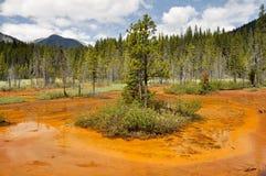 加拿大kootenay国家油漆公园罐 免版税图库摄影