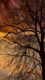更加早期的有雾的早晨剪影结构树 免版税库存图片