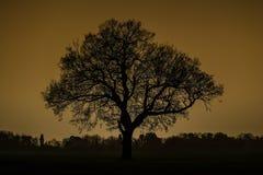 更加早期的有雾的早晨剪影结构树 库存图片