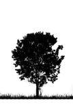 更加早期的有雾的早晨剪影结构树 免版税库存照片