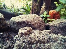 加朗岩石 图库摄影