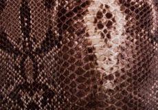 加法器的皮肤的棕色纹理 免版税库存照片