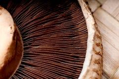 加盖宏观蘑菇portabella 库存图片