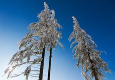 加盖的冷杉德国雪三结构树 库存图片