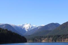 加盖的森林峰顶雪 库存照片