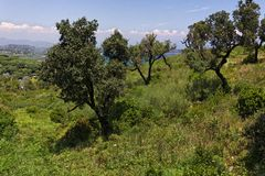 加盖Camarat,与老树的风景,南欧 免版税库存照片