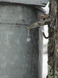 加糖在佛蒙特的槭树 库存照片