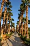 洪加达,埃及- 2013年10月14日:美丽的棕榈树在红海的岸的一家热带豪华旅馆里 免版税图库摄影
