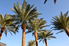 洪加达,埃及- 2013年10月14日:美丽的棕榈树在红海的岸的一家热带豪华旅馆里 库存图片