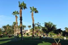 洪加达,埃及- 2013年10月14日:美丽的棕榈树在红海的岸的一家热带豪华旅馆里 图库摄影