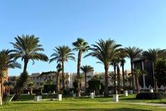 洪加达,埃及- 2013年10月14日:美丽的棕榈树在红海的岸的一家热带豪华旅馆里 免版税库存照片