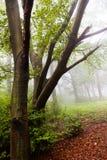 更加道路接近秋天的森林 图库摄影