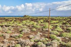 加那利群岛沙漠 免版税图库摄影