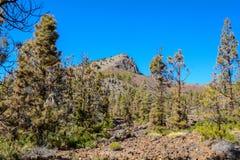 加那利群岛自然公园西班牙 树和道路向山 库存照片