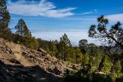 加那利群岛自然公园西班牙 树和道路向山 免版税库存图片