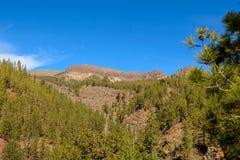 加那利群岛自然公园西班牙 库存照片