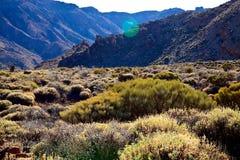 Teide国家公园 库存照片