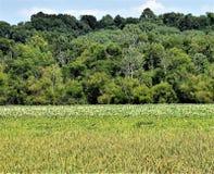 更加绿色的牧场地 免版税库存图片