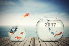 移动向更大的水族馆的金鱼与2017年 免版税库存图片