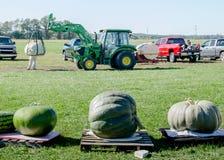 移动和称巨型南瓜和金瓜的拖拉机 图库摄影