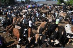 活动在传统母牛市场上在Eid Al的准备Adha时在印度尼西亚 库存照片