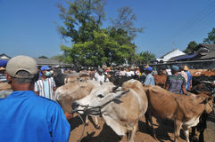 活动在传统母牛市场上在Eid Al的准备Adha时在印度尼西亚 免版税库存图片