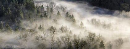 滚动在森林的雾在俄勒冈 免版税库存照片