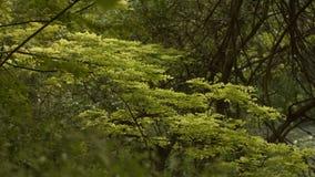移动在灌木后的小河 股票录像