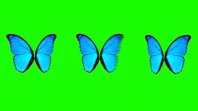 移动在绿色屏幕背景的另外速度的蝴蝶翼 库存例证