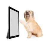 移动平面屏幕显示的大狗 免版税库存图片