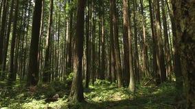 移动式摄影车射击醉汉太平洋西北地区雨林 股票视频