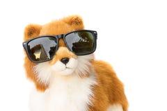 移动式摄影车狗佩带的太阳镜在白色背景染黑 免版税库存图片