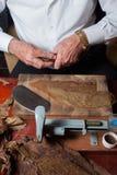 滚动手工制造雪茄parejos的Torcedor 免版税库存图片