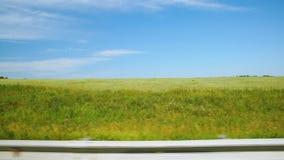 移动沿一个黄色农业领域(POV) 股票录像