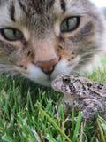 动物交往-引导的鼻子 库存图片