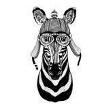 动物佩带的摩托车盔甲的斑马马手拉的图象T恤杉的,纹身花刺,象征,徽章,商标,补丁 库存图片