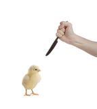 动物保存 免版税库存照片