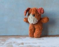 动物保护 单独红色小狗 免版税库存图片