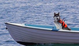 动物保险 免版税库存照片