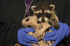 动物修复 免版税库存图片