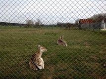 动物倾斜的img农场 图库摄影