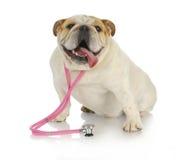 动物健康 免版税库存图片