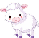 动物农场横向许多sheeeps夏天 羊羔 皇族释放例证