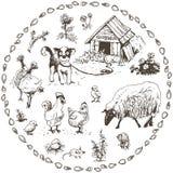 动物农场横向许多sheeeps夏天 库存图片